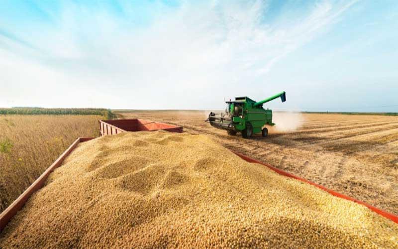 IBGE prevê safra recorde de 252 milhões de toneladas em 2020