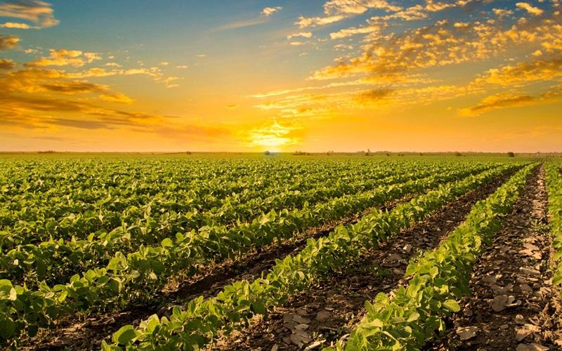 Ministério premia empresas do agronegócio por boas práticas