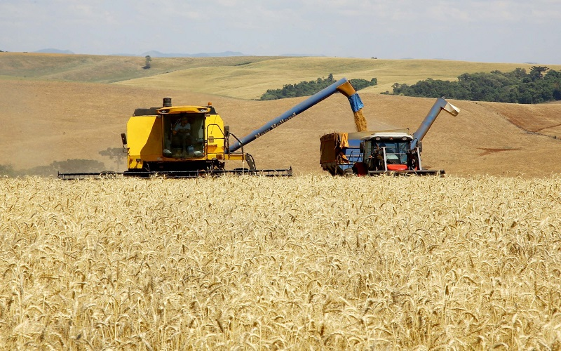 Safra de grãos deve ser recorde em 2021, diz IBGE